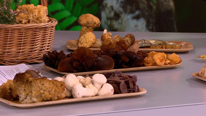 Co można przygotować z grzybów?
