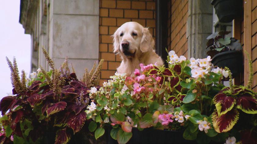 Słodki pies na balkonie
