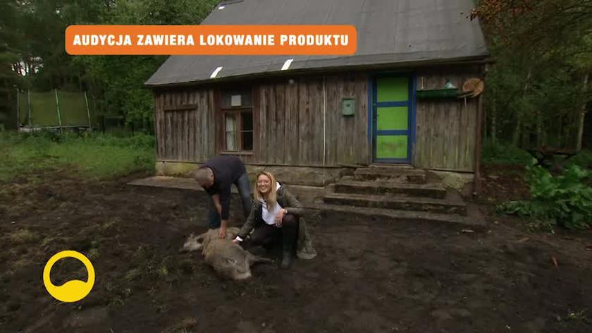 Małe dziki, którymi opiekuje się Marcin Kostrzyński